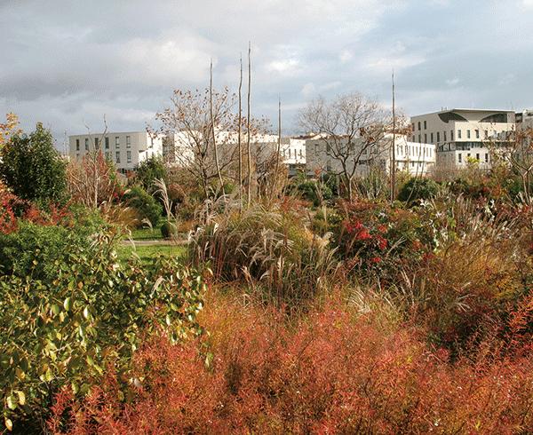 Le jardin en automne